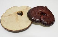 Reishi, el hongo milagroso para la salud