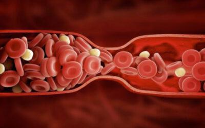 Reishi y anticoagulantes orales ¿Pueden combinarse?